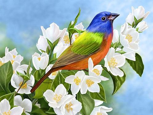Большая яркая птица на фоне цветущего жасмина