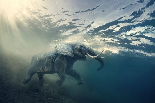 Африканский слон в океане с солнечными лучами