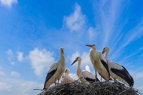 Аисты в гнезде на фоне летнего голубого неба