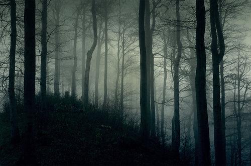 Туманный темный лес