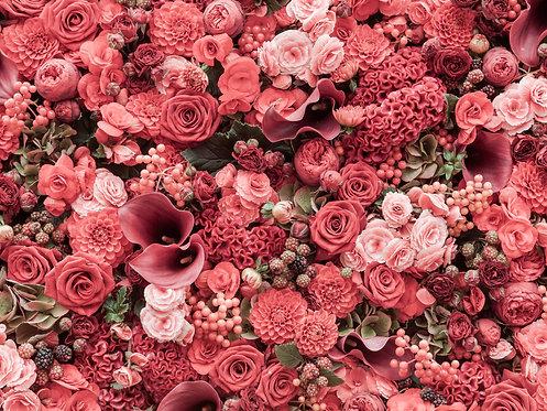 Розовый цветочный фон с розами крупным планом
