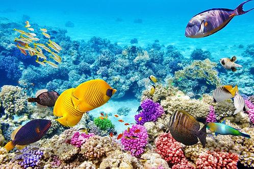 Изумительный подводный мир с кораллами и тропическими рыбами