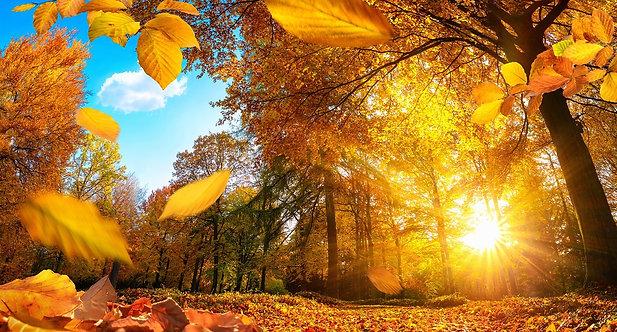 Золотая осень в лесу с опадающими листьями