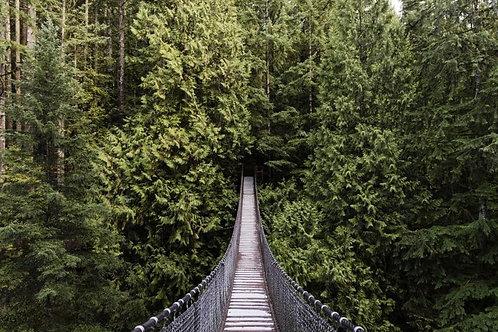 Лесной мост в Норт-Ванкувере - Канада