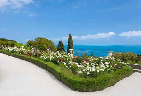 Фотообои. Фрески. Картины. Сад. Цветы. Белые розы. Вид на море. Природа. Пейзаж