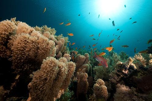 Анемоны - коралловая и тропическая подводная жизнь в Красном море
