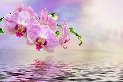 Ветка с розовыми цветами орхидеи над водой на нежном розовом фоне