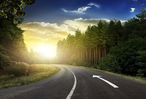 Изгиб асфальтовой дороги в сосновом лесу в лучах заходящего солнца