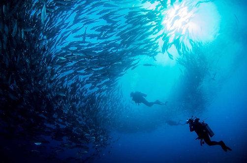 Вид с морского дна