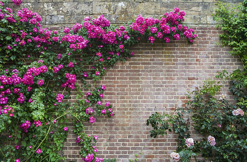 Цветы на кирпичной стене в красивом саду средневекового замка Хивер