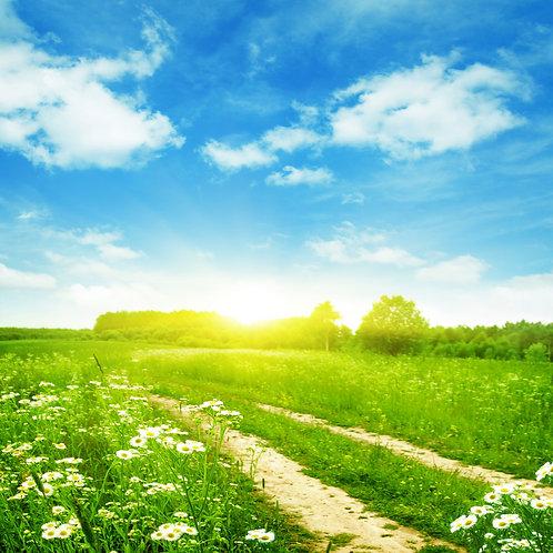 Фотообои. Фрески. Картины. Ромашковое поле. Сельская дорога. Трава. Голубое небо