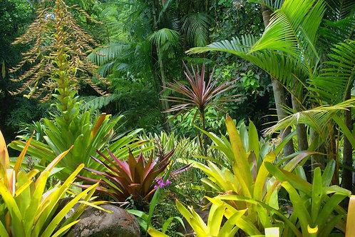 Тропический сад в Кэрнсе в Австралии