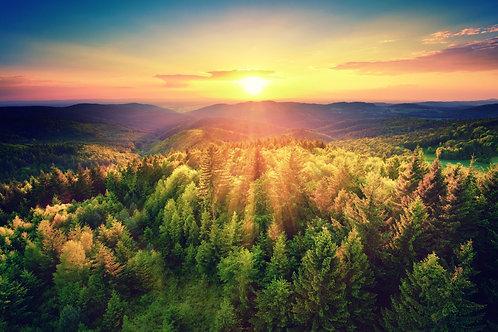 Холмы с хвойными лесами в лучах заходящего солнца