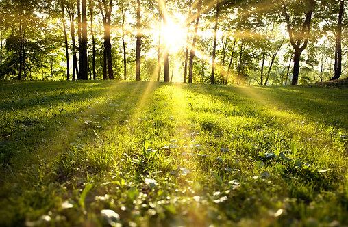Солнечный свет в зеленом лесу весной