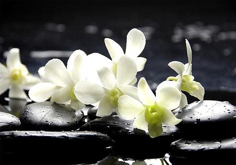 Белые цветы орхидеи на черных мокрых камнях с каплями воды