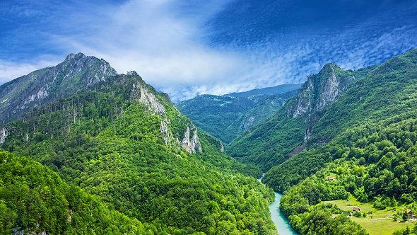 Горная река Тара и лес в Черногории