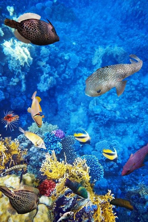 Восхитительный подводный мир с кораллами и тропическими рыбами