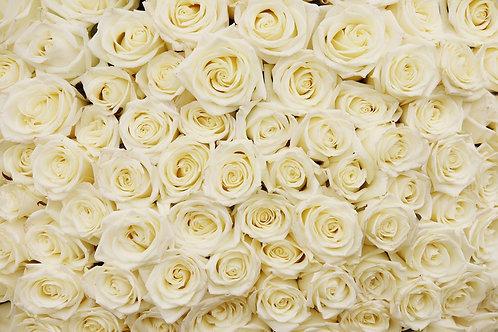 Огромный букет белых роз крупным планом