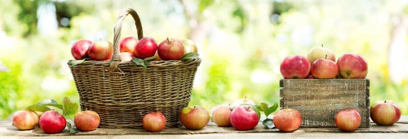Фотообои. Фрески. Картины. Красные яблоки в корзине. Натюрморт