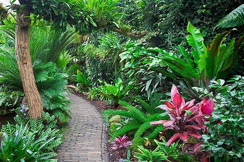 Пейзаж с тропическим садом