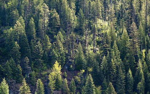 Вечнозеленый лес
