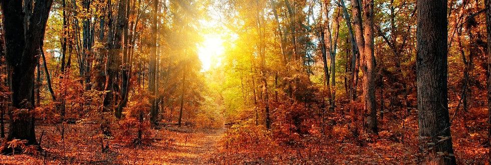 Смешанный осенний лес солнечным днем