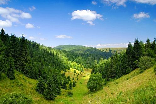 Сосновые горные леса в Татрах - Словакия