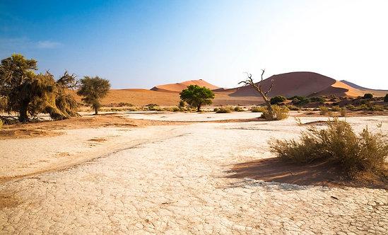 Фотообои. Фрески. Картины. Пустыня. Кустарник. Деревья. Сопки. Природа. Пейзаж