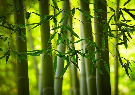 Бамбуковый лес крупным планом на размытом зеленом фоне