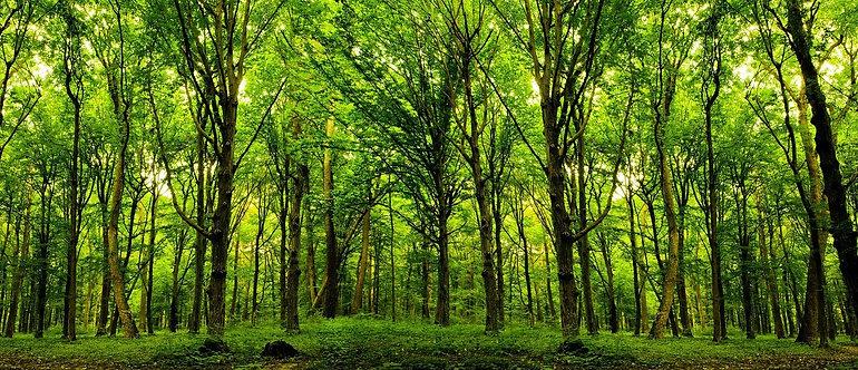 Зеленый лес в лучах солнечного света