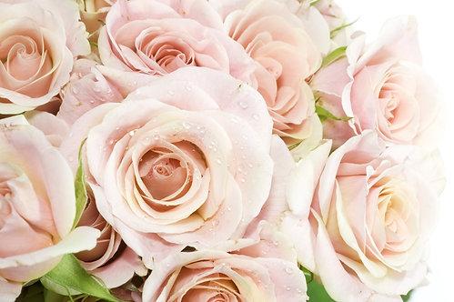 Белые розы крупным планом с каплями воды