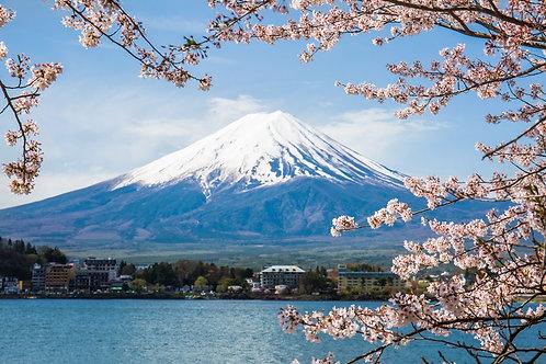Гора Фудзи и ветки цветущей сакуры весной на озере Кавагучико - Япония