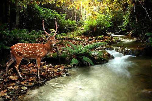 Тропический лесной ручей и пятнистый олень