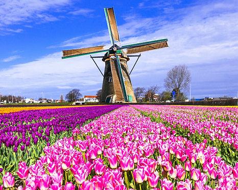 Ветряная мельница и поле с тюльпанами в Голландии