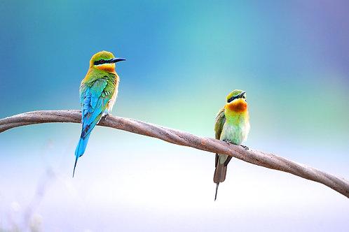 Две птички на ветке на фоне голубого неба