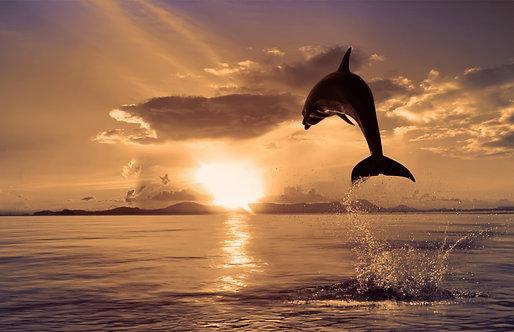 Красивый дельфин выпрыгивает из моря на закате
