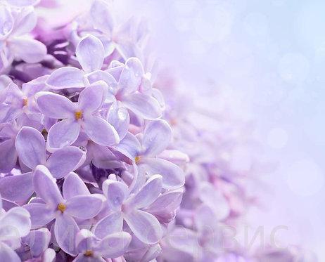 Цветы сирени на абстрактном фоне