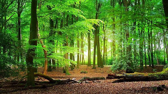 Весенний лес в Велюве - Нидерланды