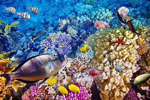 Притягательный подводный мир с кораллами и тропическими рыбами