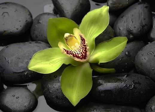 Зеленый цветок орхидеи на черных мокрых камнях