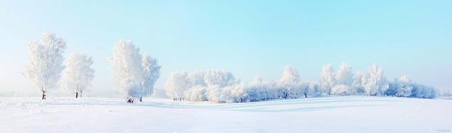 Красивый зимний пейзаж с деревьями, покрытыми инеем | #90539524