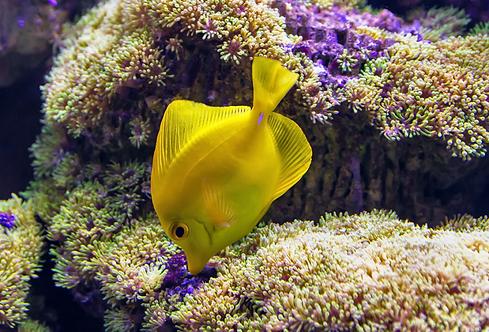 Изумительный подводный мир с тропическими рыбами и кораллами