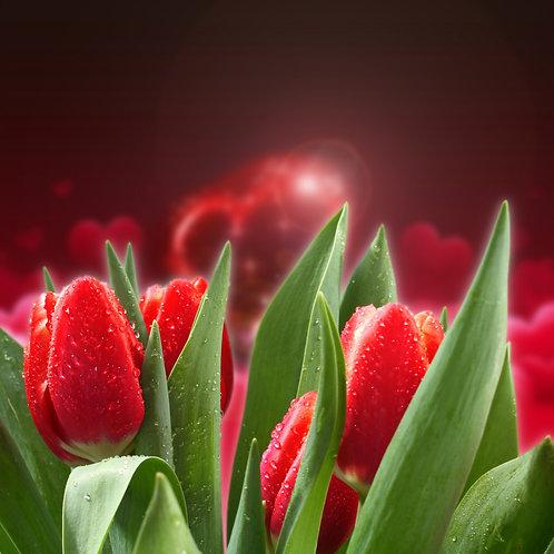 Красные тюльпаны с каплями воды на размытом фоне