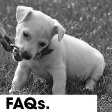 Puppy FAQs.jpg