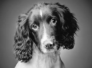 Max Puppy 01.jpg