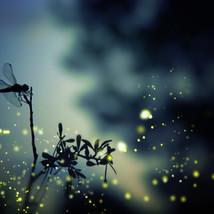 On John Deere & Dragonflies