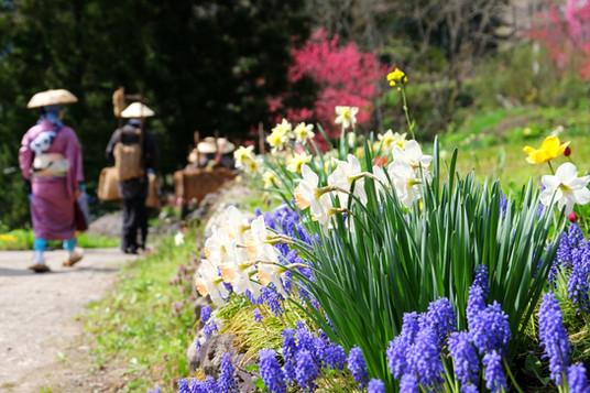 Salt Road Festival, Otari, Nagano.jpg