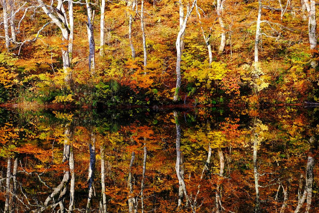 Fall Reflections from Kama-ike, Otari, Nagano.jpg