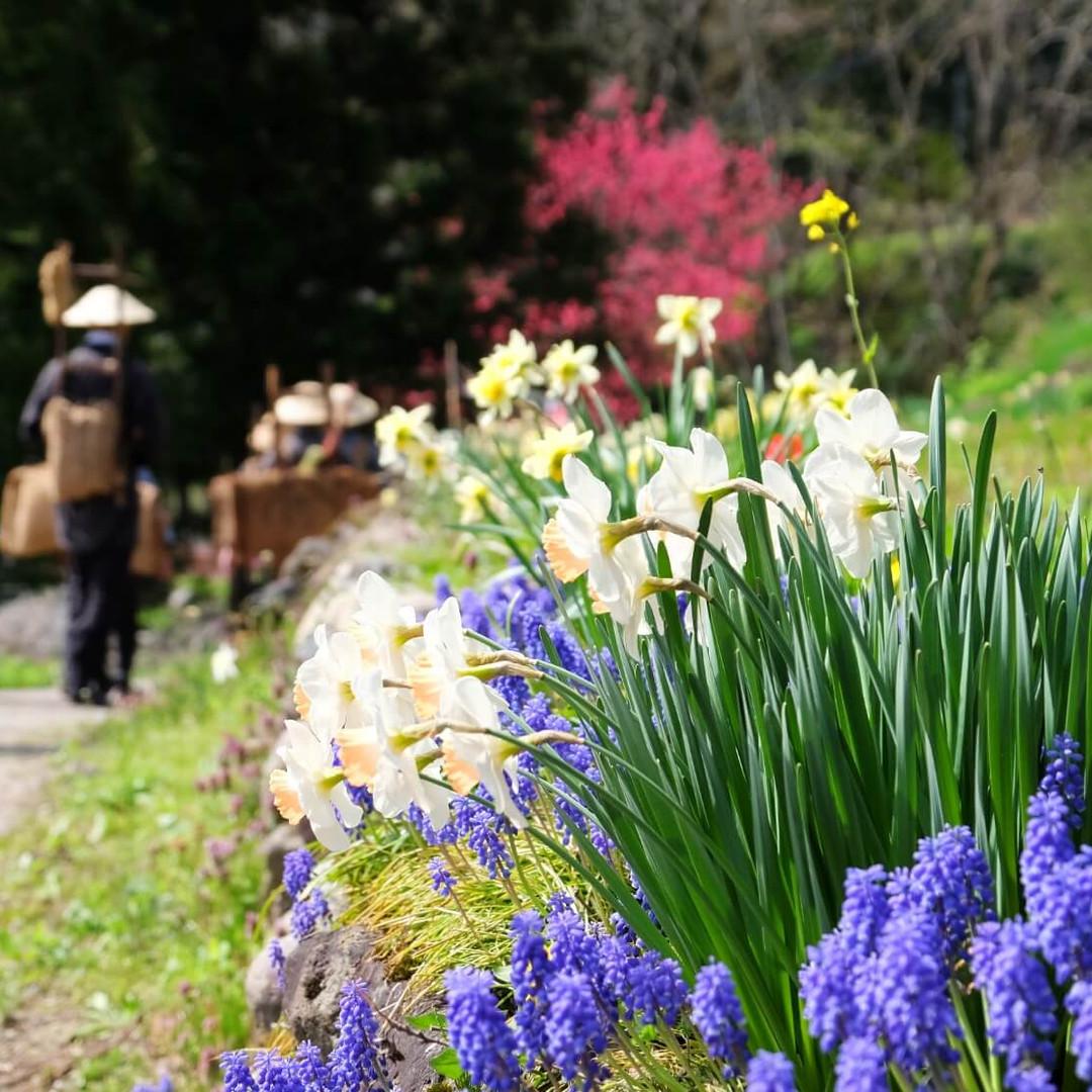 Flowers in Bloom Along the Salt Road, Salt Road Festival, Nagano