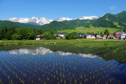 Tsugaike in Spring, Otari, Nagano.jpg